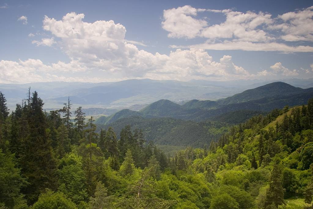 საქართველოს მართმადიდებელი ეკლესიისთვის ტყის რესურსების გადაცემის შესახებ