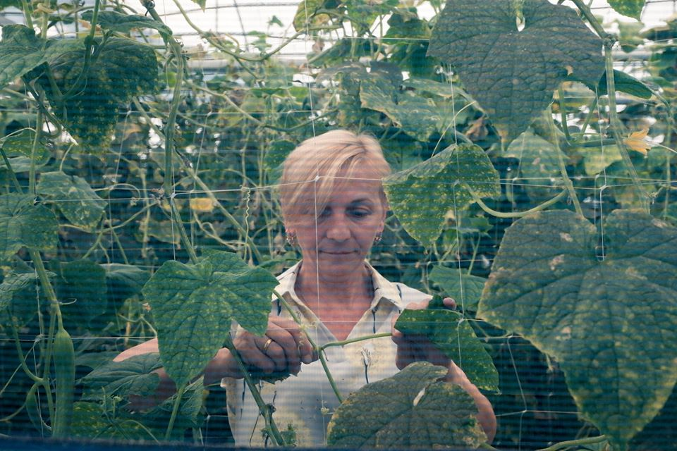 Keti Tomeishvili has given her greenhouse to her four women employees for free