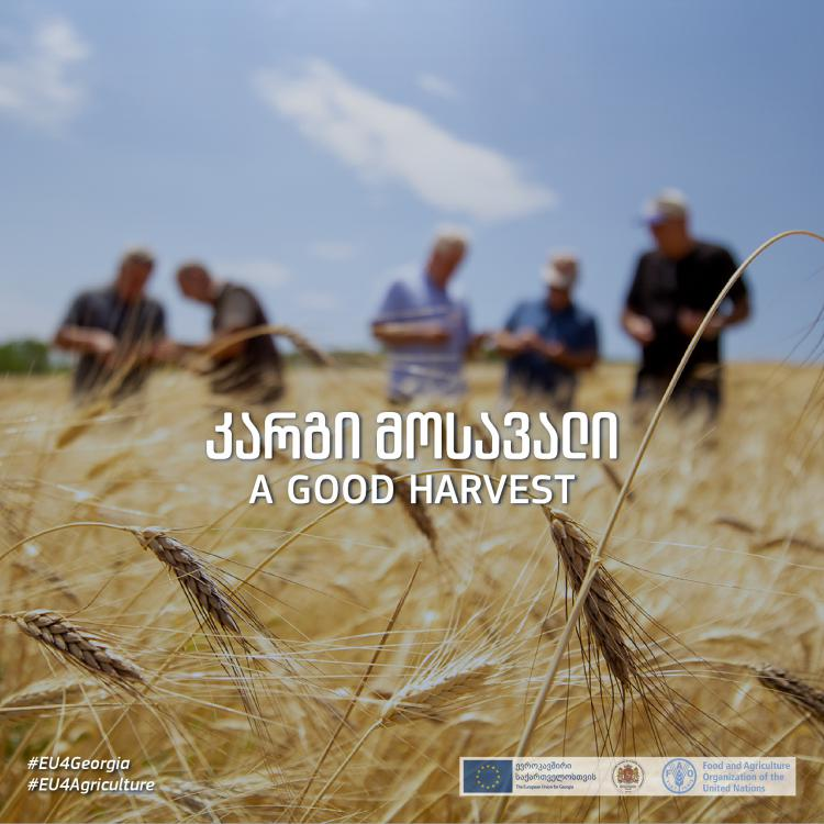 A Good Harvest - Campaign on EU support to Georgian farmers