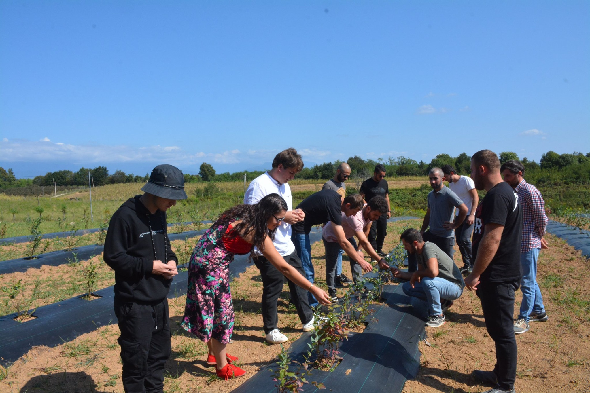 Certification of the participants of the Blueberry Farming Consultant